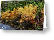 Down River Greeting Card