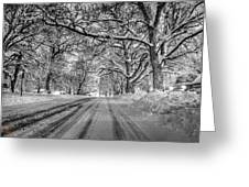 Down The Lane Greeting Card by Dan Crosby