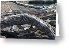 Down Tree Arch Greeting Card