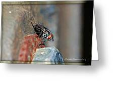 Down View Greeting Card