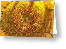 Downtown Sunflower Close-up Greeting Card