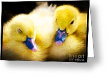 Downy Ducklings Greeting Card
