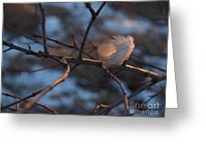 Downy Feather Backlit On Wintry Branch At Twilight Greeting Card