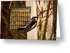 Downy Woodpecker 1 Greeting Card