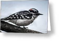 Downy Woodpecker 3 Greeting Card