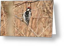Downy Woodpecker In Brush Greeting Card