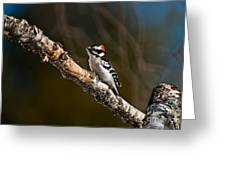 Downy Woodpecker Pictures 36 Greeting Card