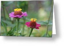 Dr Seuss Flowers Greeting Card