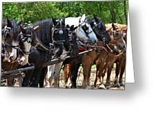 Draft Horses All In A Row Greeting Card