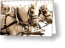 Draft Horses Enjoy A Day In Old Sacramento Greeting Card