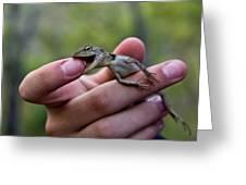 Dragon Biting Back Greeting Card