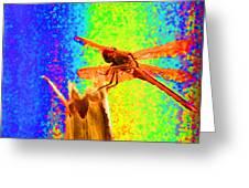 Dragon Fly- Creative Greeting Card