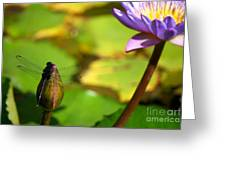 Dragon Fly On Bud And Water Lily Horizontal Number One Greeting Card