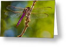 Dragon Fly Or Not Greeting Card