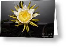 Dragon Fruit Blooming At Night I Greeting Card