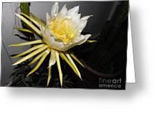 Dragon Fruit Blossom II Greeting Card