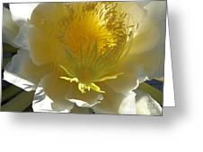 Dragon Fruit Blossom Iv Greeting Card