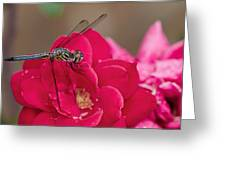 Dragon In The Rose Garden Greeting Card