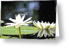 Dragon Lily 3  Greeting Card