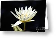 Dragon Lily  Greeting Card