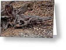 Dragon Skull Greeting Card
