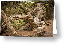 Dragon Tree Greeting Card