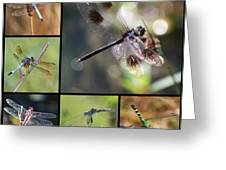 Dragonflies On Twigs Collage Greeting Card