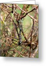 Dragonflies Greeting Card