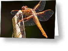 Dragonfly 1 Greeting Card by Scott Gould