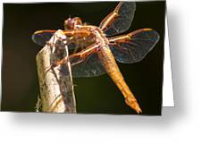 Dragonfly 3 Greeting Card by Scott Gould