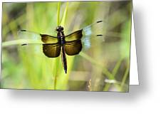 Dragonfly 9249 Greeting Card
