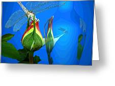 Dragonfly And Bud On Blue Greeting Card
