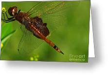 Dragonfly Art 2 Greeting Card