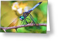 Dragonfly Art - A Thorny Situation Greeting Card