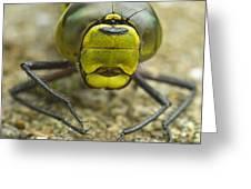 Dragonfly Close-up Greeting Card