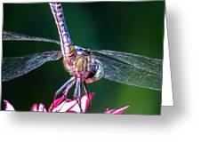 Dragonfly Close Up Greeting Card
