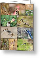 Dragonfly Collage 3 Greeting Card