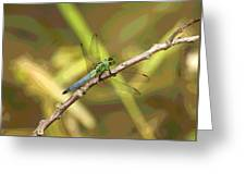 Dragonfly - Common Green Darner Greeting Card