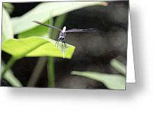 Dragonfly Dimensions Greeting Card