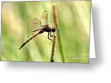 Dragonfly Gold Greeting Card