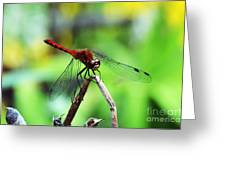 Dragonfly Hard At Work Greeting Card