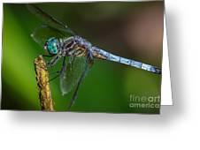 Dragonfly Having Summer Fun Greeting Card