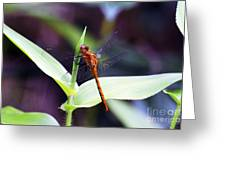 Dragonfly Hunt Greeting Card