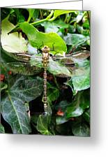 Dragonfly In An English Garden Greeting Card