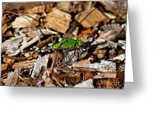 Dragonfly In Mulch Greeting Card
