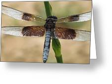 Dragonfly In Summer Greeting Card