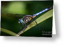 Dragonfly In The Wind Greeting Card