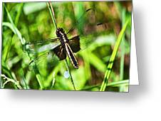 Dragonfly Ins 22 Greeting Card