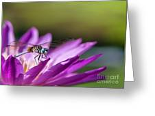 Dragonfly Macro On A Water Lily Greeting Card