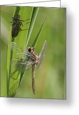 Dragonfly Metamorphosis - Eleventh In Series Greeting Card